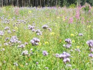 Flore multicolore (3)